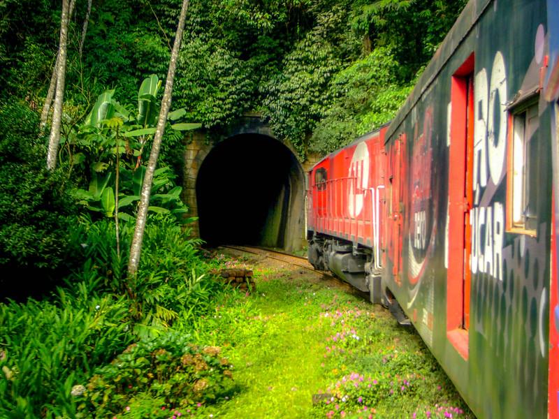 train jungle.jpg