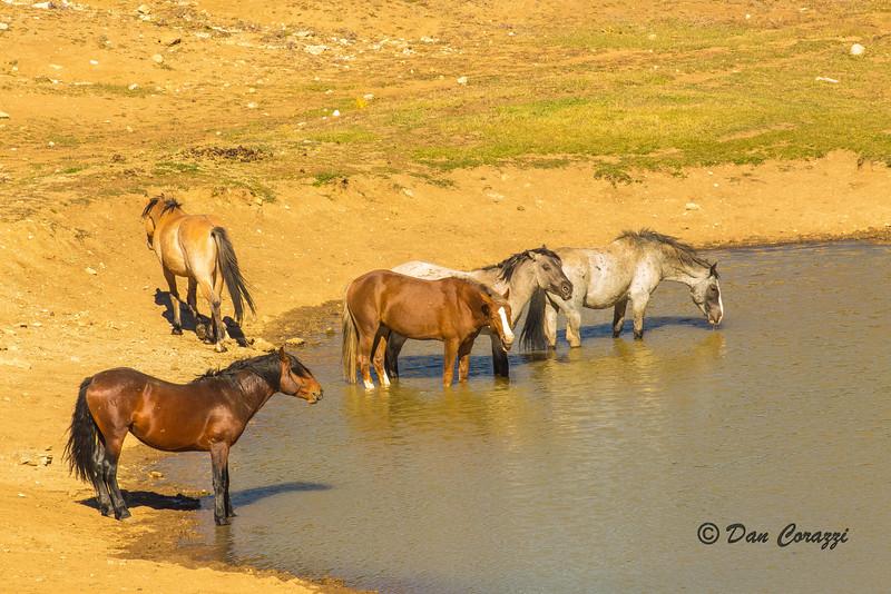 Watering Mustangs 3-1-2.jpg