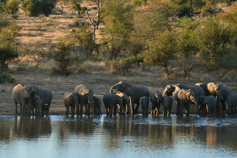 Elephants drinking copy.jpg