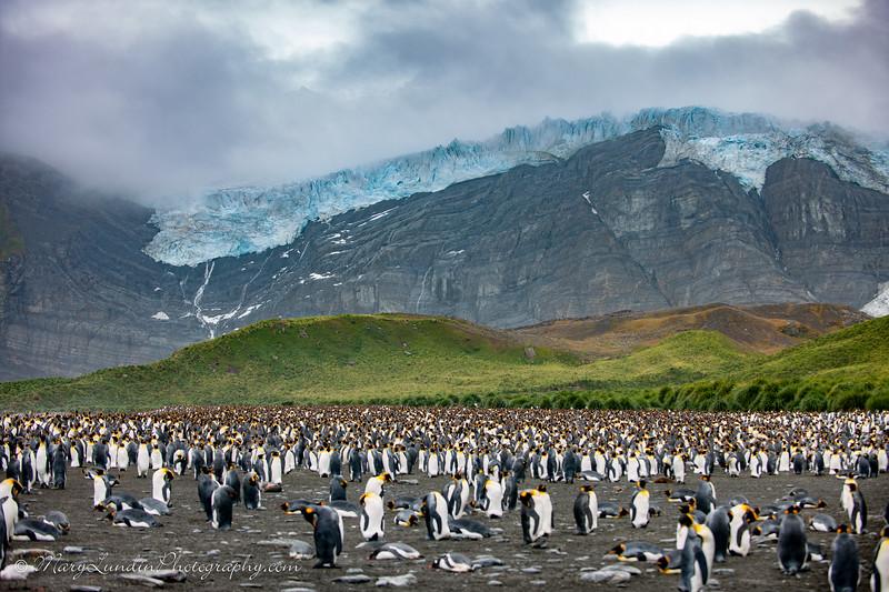 Antarctic-142