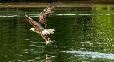 James River Birds