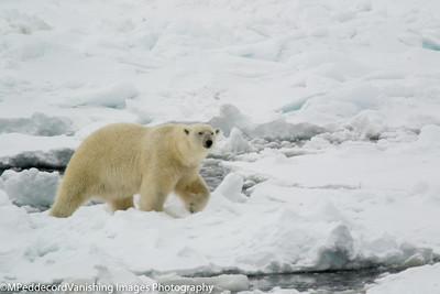 Polar Regions & Alaska
