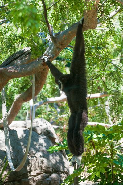 Monkey in tree!