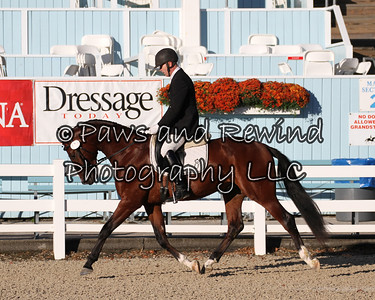 Tuesday Dixon Oval:  Class 129 Suitable to Become a Dressage Horse 3 Y/Os