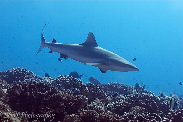 Fakarava Scuba Diving