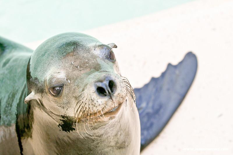 Seaworld-Zoo-9.jpg