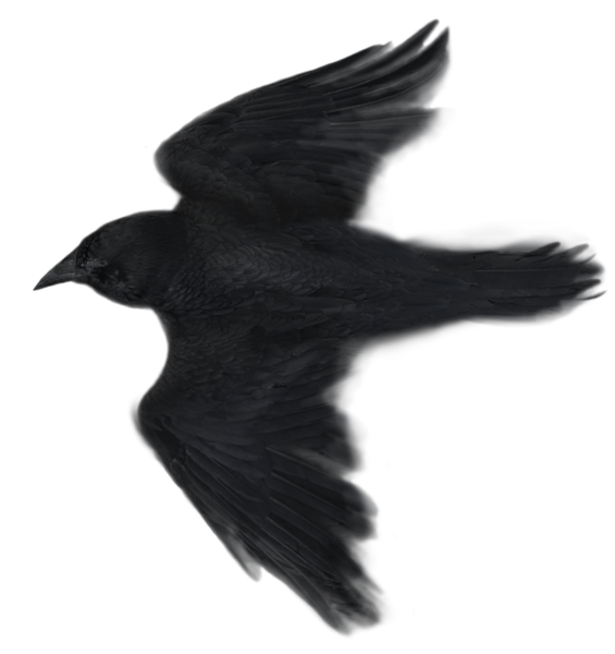 Raven 29.png