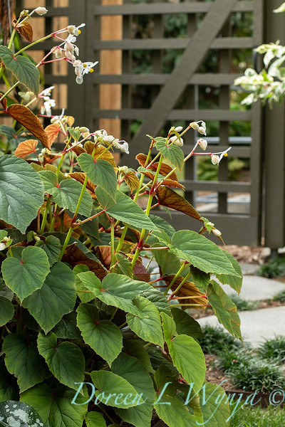 Lisa Bauer - designer's garden_1324.jpg