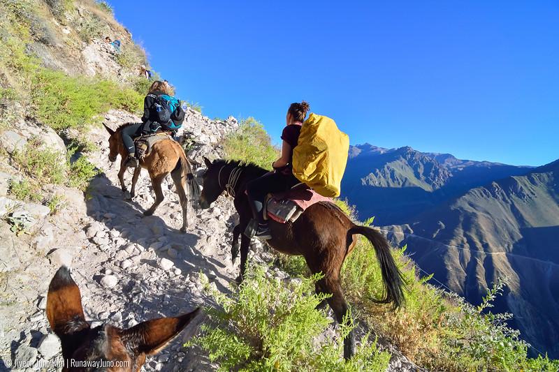 06.02_Colca Canyon-6625.jpg