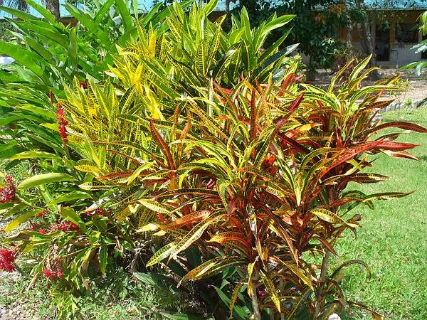 034_Belize_Verdant_Tropical_beauty.jpg