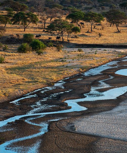 Tarangire National Park.  Tanzania, 2019