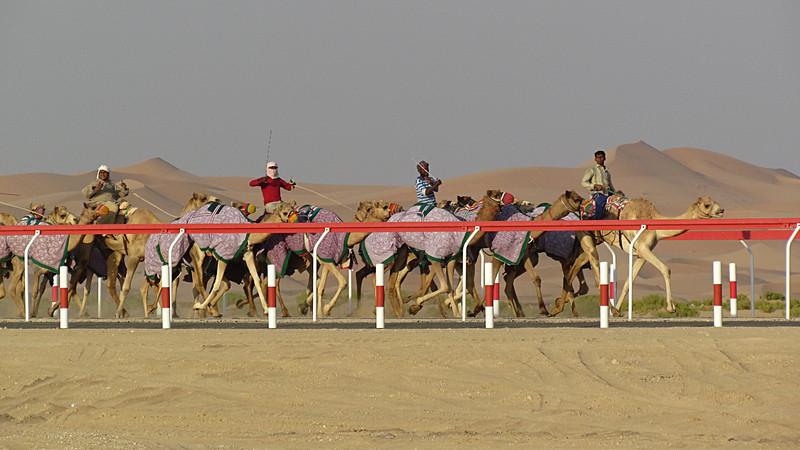 camel race close.jpg