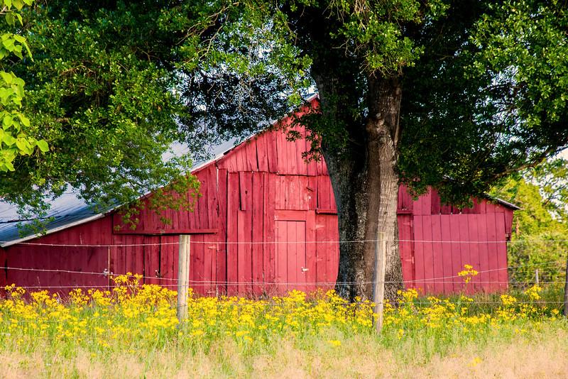 2016_4_9 Texas Wildflower Shoot-8986.jpg