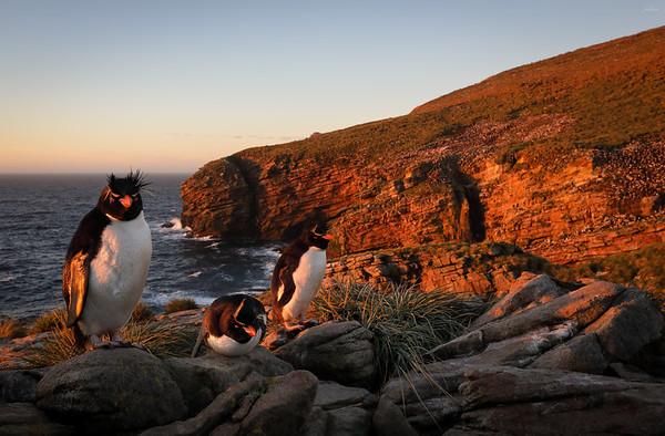 Falklands Trip Discussion