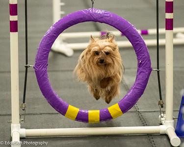 Dinky Dogs TDAA Trials May 2021