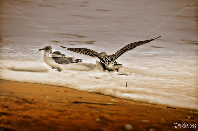 beachSeagullsFoam_0051HDR Wmark.jpg