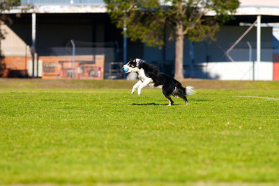 August flyball fun