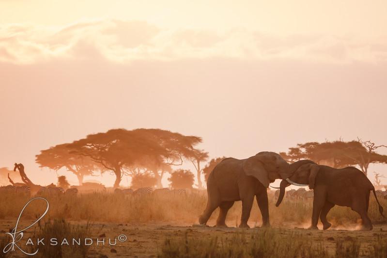 SunInAfrica-021.jpg
