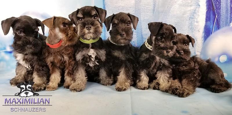 Hettie Pups 021.jpg