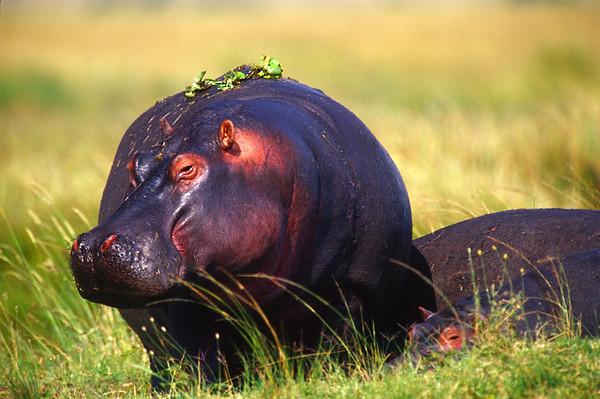 masai mara nature preserve