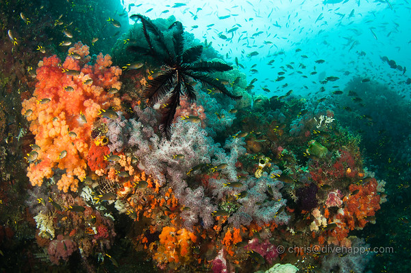 Diving Raja Ampat February 2016