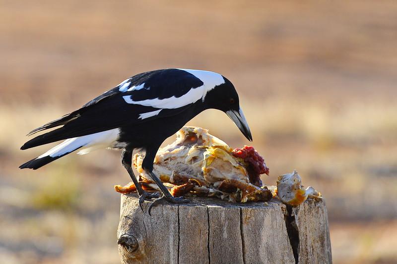 Chicken breakfast