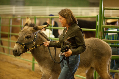 2013 BLM Horse Show
