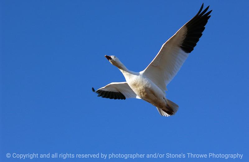 015-birds-bosque_del_apache-nm-01dec06-3083