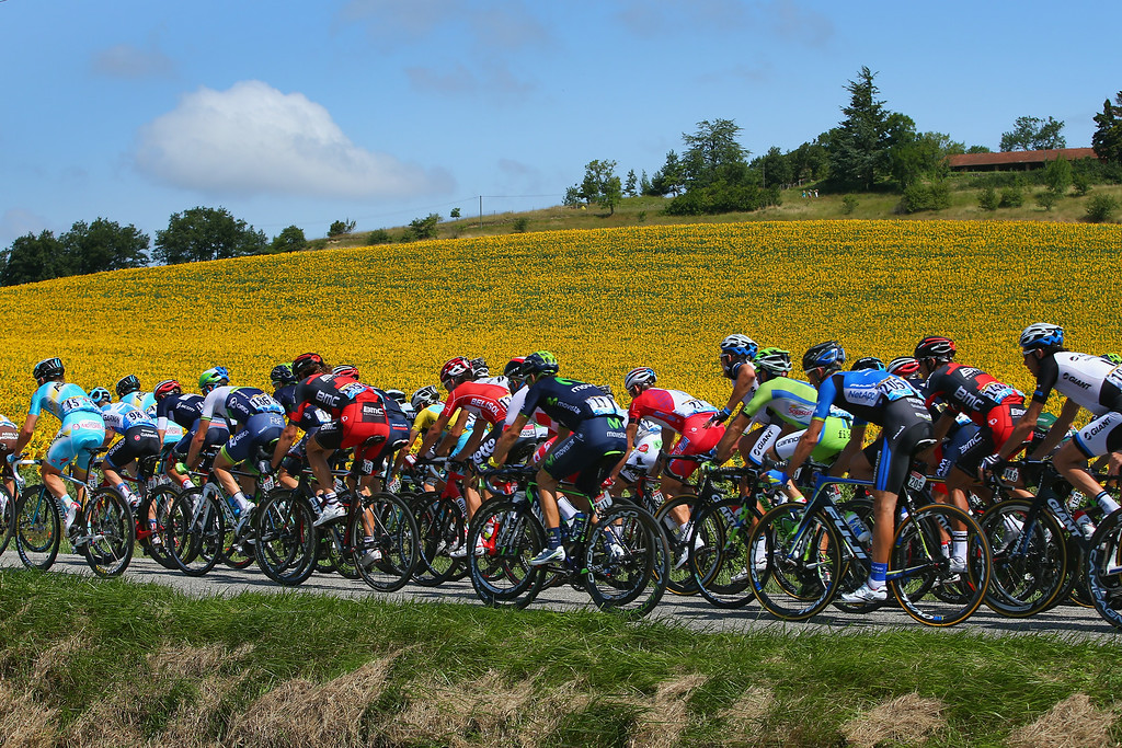 . The peloton passes by sunflower fields during the sixteenth stage of the 2014 Tour de France, a 238km stage between Carcassonne and Bagneres-de-Luchon, on July 22, 2014 in Plaigne, France.  (Photo by Doug Pensinger/Getty Images)