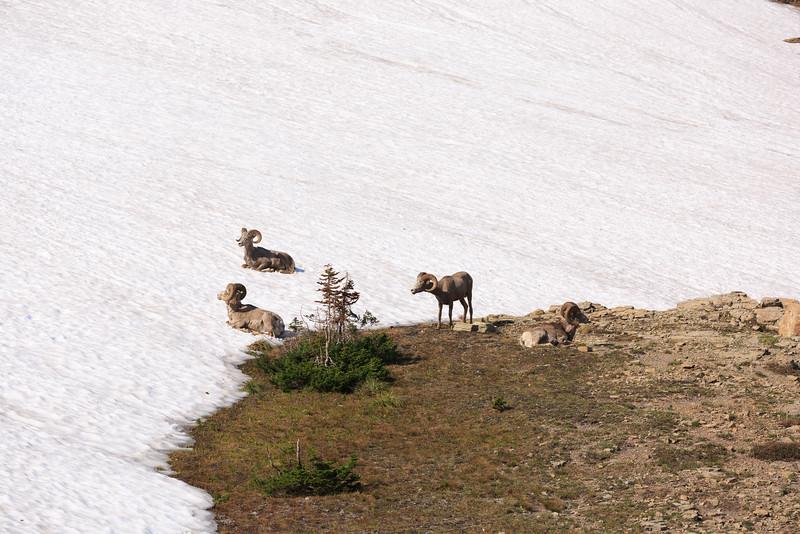 2014_07_13 Glacier National Park 056.jpg