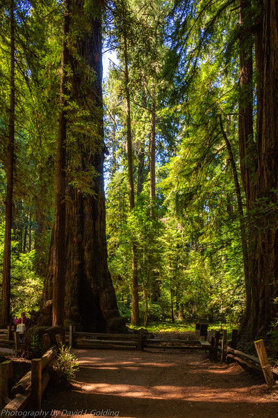 Redwoods National Park Collection
