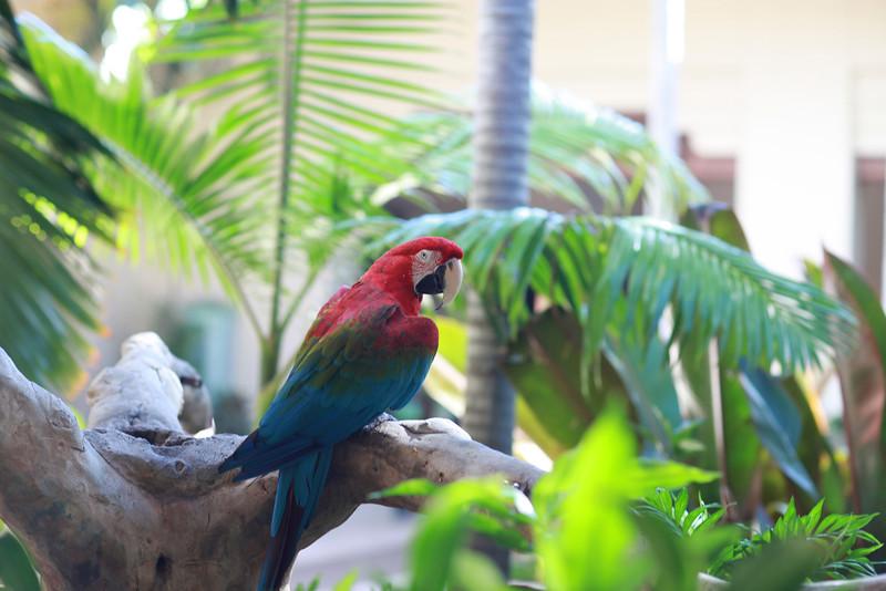 Kauai_D5_AM 197.jpg