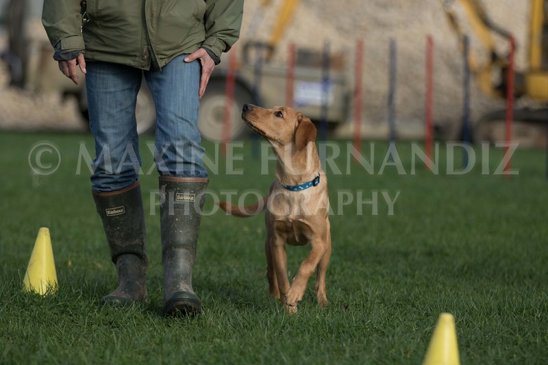 Puppy YOung Dog-0764.jpg