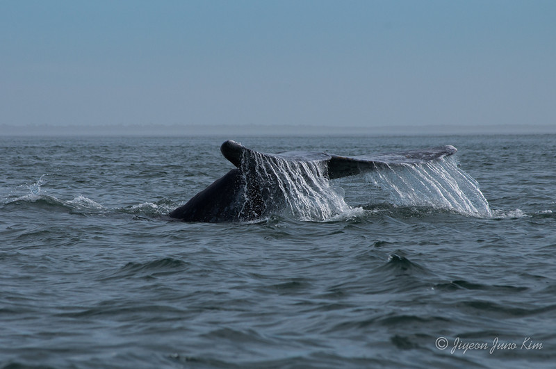 Mexico-Loreto-Whale-2397.jpg