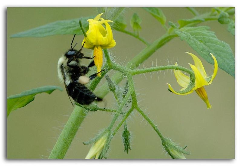 Feeding Bee.jpg
