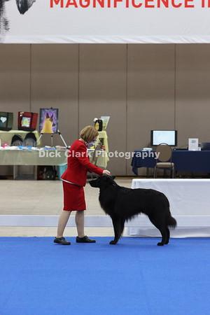 Dogs - Amateur Owner Handler
