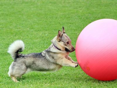 20 mei 2012 Dag van de Hond