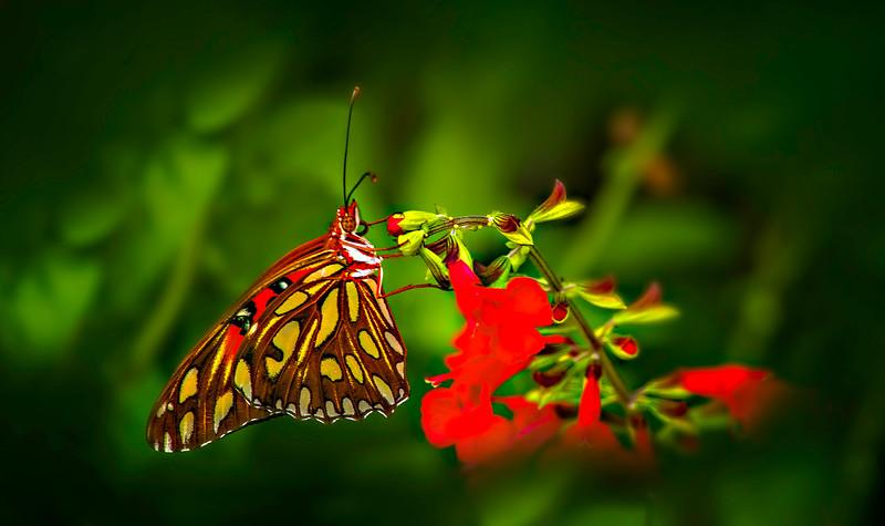 Butterfly-138.jpg