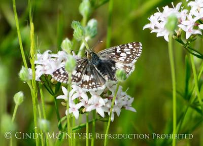 Oklahoma Butterflies