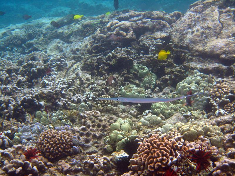 509- 20080416- Hawaii 20-Snorkelling IMG_0762.jpg