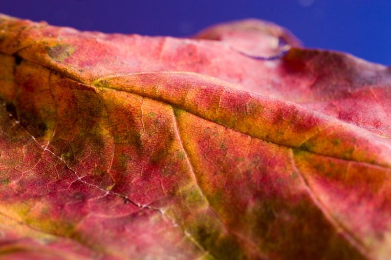 LeafProfile.jpg