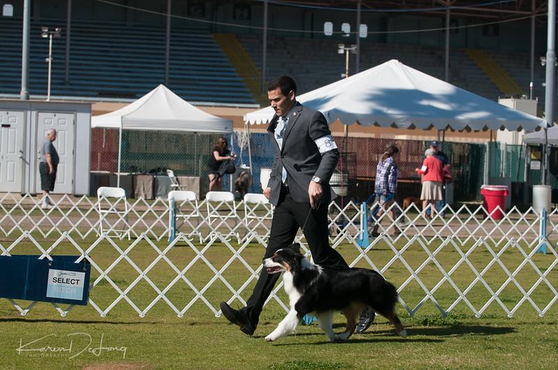 20170205_Australian Shepherds_Lost Dutchman Kennel Club-109.jpg