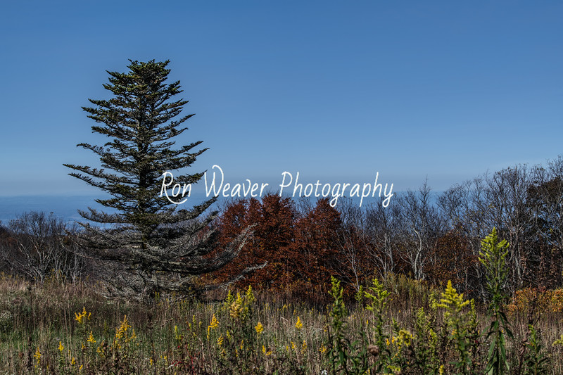 Fall on Viking Mountain