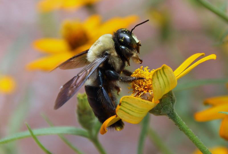 Bumble bee 18