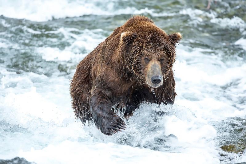 Alaska_2013_FH0T8314-2.jpg