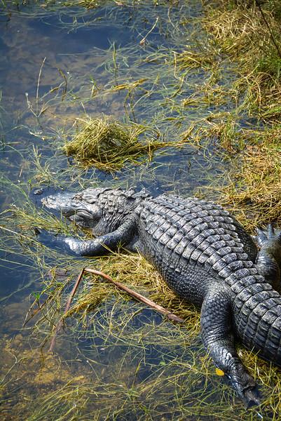 Everglades-19.jpg