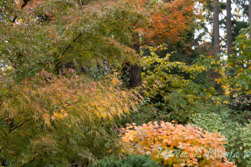 Dietrick fall garden_2062.jpg