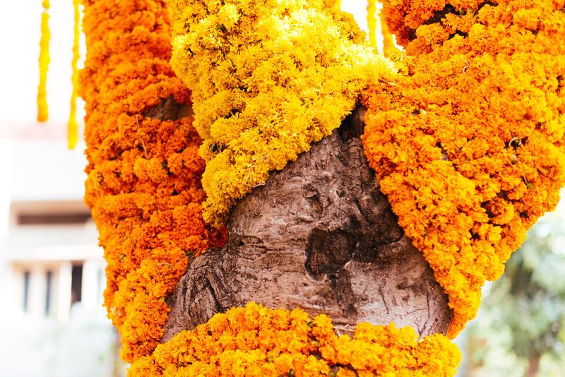 Yashodhar-Carolyn-101.jpg