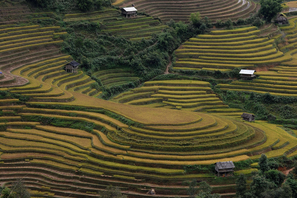 . This picture taken on October 2, 2013 shows terrace rice fields in Mu Cang Chai district, in the northern mountainous province of Yen Bai. The local residents, mostly from the Hmong hill tribe, grow rice in the picturesque terrace fields whose age is estimated to hundreds years. Due to hard farming conditions, especially irrigation works, locals produce only one rice crop per year. In recent years a growing numbers of tourists have been attracted by the beautiful landscapes created by the region\'s rice terrace fields.  HOANG DINH NAM/AFP/Getty Images