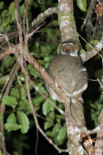 Madagascar_2013_FH0T9177.jpg